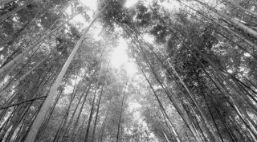 竹の買取について
